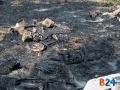 incendio via padre kolbe-4
