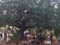 laboratori giardino botanico-4