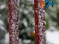 Neve-11