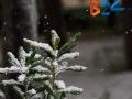 Neve-2
