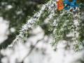 Neve-3