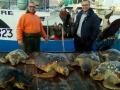 recupero record tartarughe marine 2