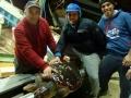 recupero record tartarughe marine 3