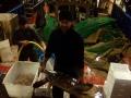 recupero record tartarughe marine