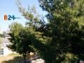 albero_4_di_vittorio.jpg