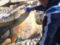 Carcassa-tartaruga-marina-2a