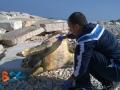 Carcassa-tartaruga-marina-3a