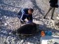 Carcassa-tartaruga-marina-5a