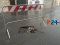 disagi_pioggia_23.jpg