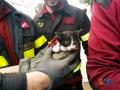 Gatto salvato don bosco5