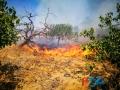 Incendio strada del carro_via cecchia corato_3