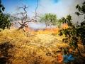 Incendio strada del carro_via cecchia corato_4