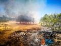 Incendio strada del carro_via cecchia corato_5