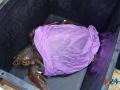 Liberazione tartarughe-2