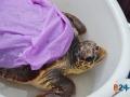 Liberazione tartarughe-9
