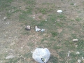 zappino rifiuti 3