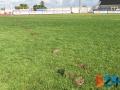 Vandalismo stadio Ventura 3