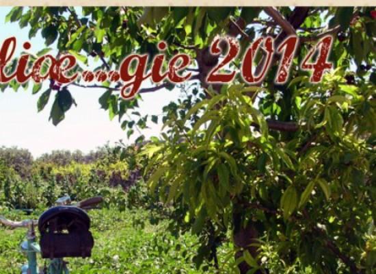 """""""Biciliæ…gie"""": itinerario cicloturistico alla scoperta della ciliegia biscegliese"""
