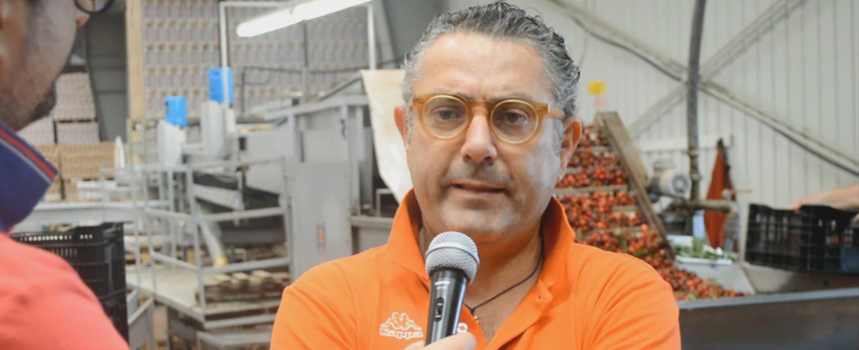 Stagione cerasicola pesantemente negativa, il bilancio di Enzo Di Pierro / VIDEO