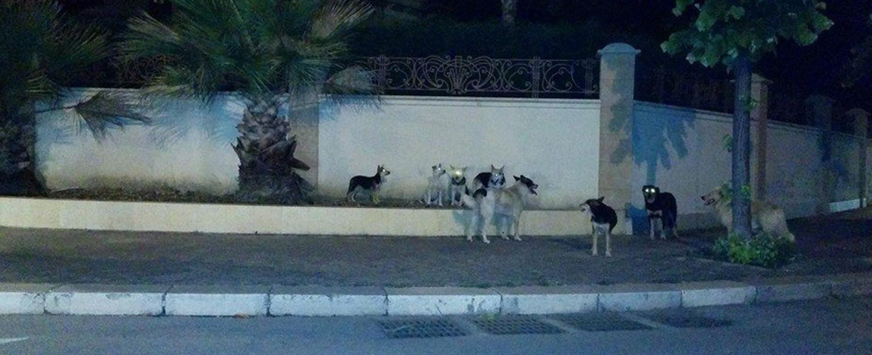 Branco numeroso di cani avvistato più volte nel quartiere Sant'Andrea