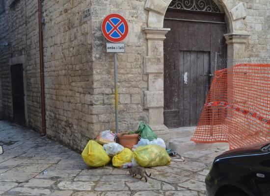 Era soffocata dai rifiuti, ora è proprio sparita la vite antirifiuti