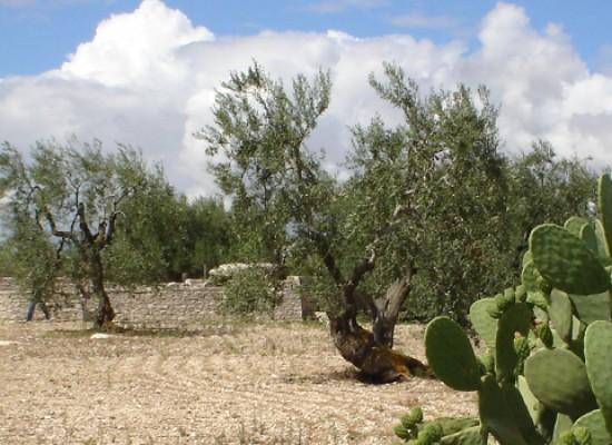 Pubblicato il bando regionale per l'acquisto di macchinari agricoli, fondi per 60 milioni di euro