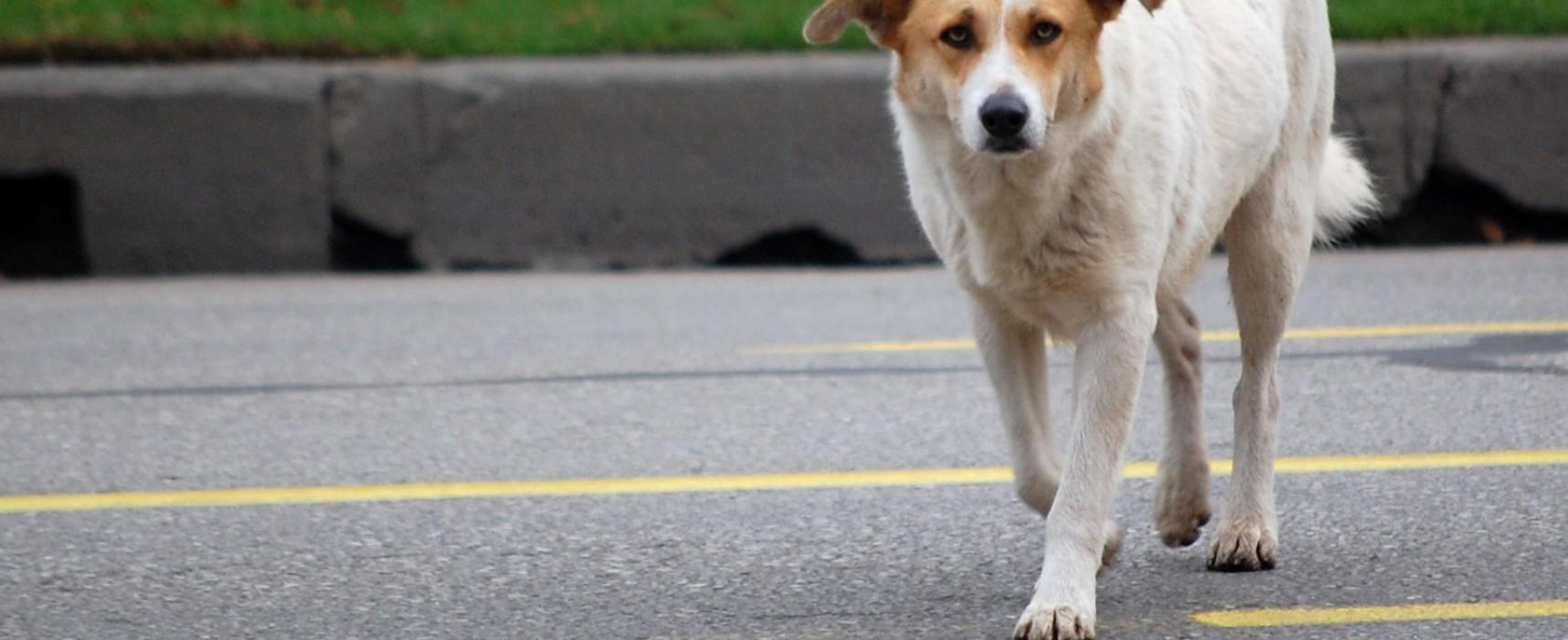 Pronto soccorso animali randagi, il comune di Bisceglie avvia il servizio sperimentale