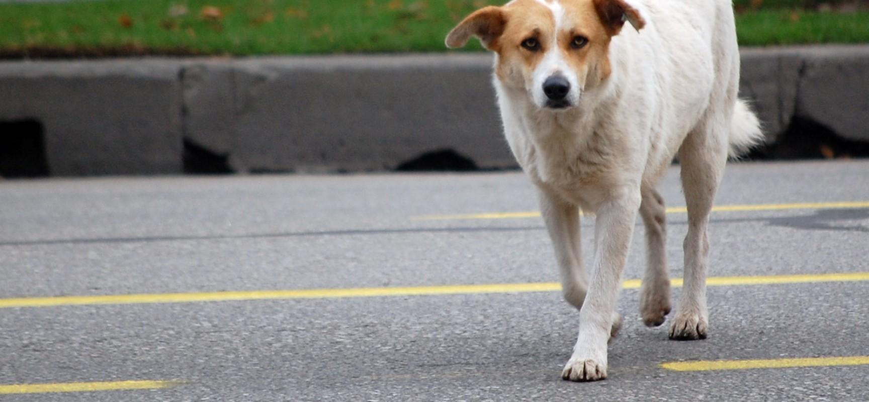 Reimmissione sul territorio dei cani randagi, il comune attiva la polizza assicurativa