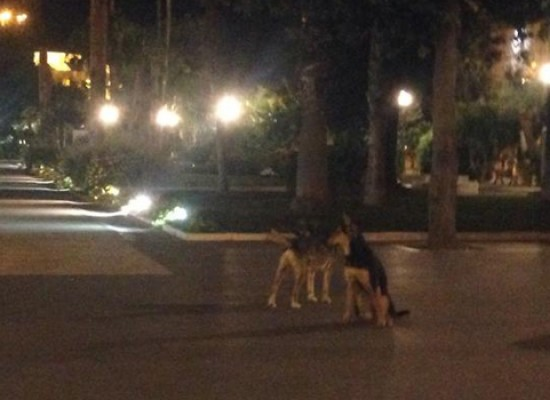 Randagismo, branco di cani a passeggio per la villa comunale
