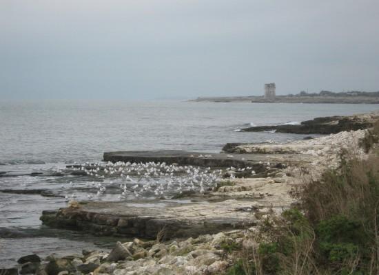 Torre Calderina, bocciato il progetto per la condotta sottomarina. Esultano i 5 Stelle