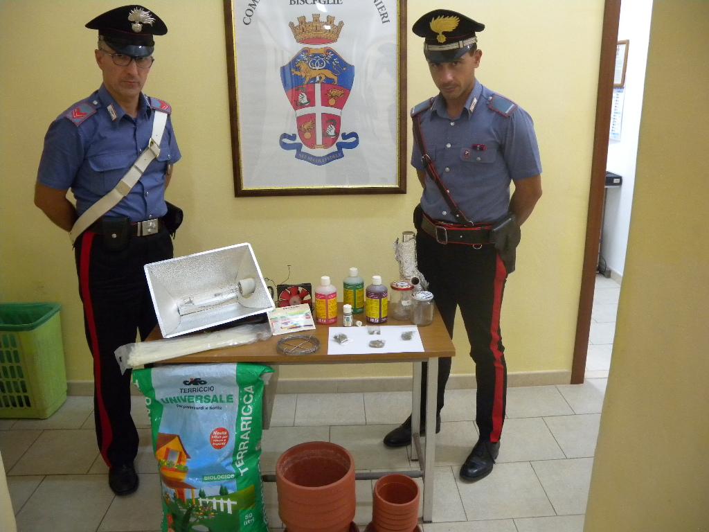 Carabinieri coltivazione marijuana int