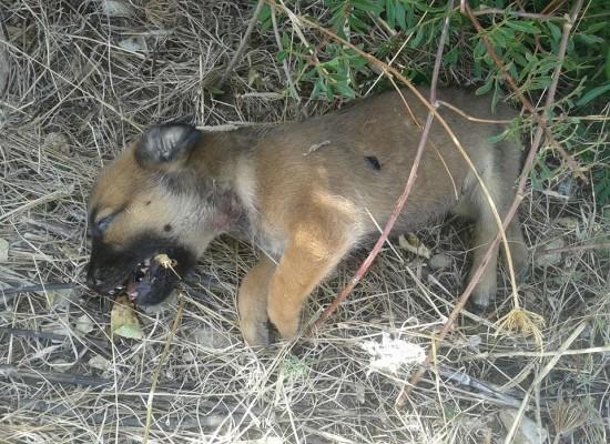 Trovato morto un intero branco di cani randagi, l'associazione Laika di Trani sporge denuncia per uccisione e maltrattamento