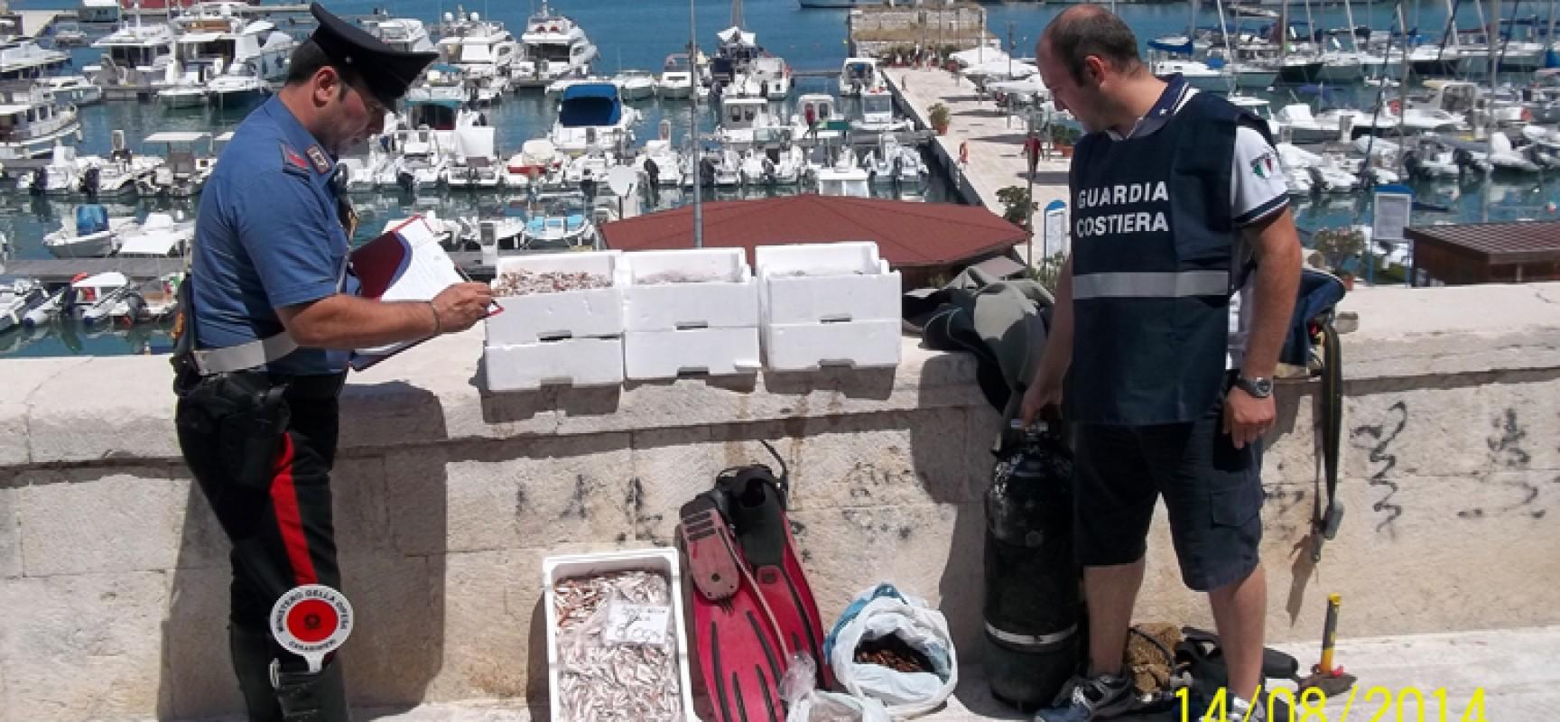 """Vendevano datteri di mare e """"agostinelle"""", denunciati due pescivendoli biscegliesi"""