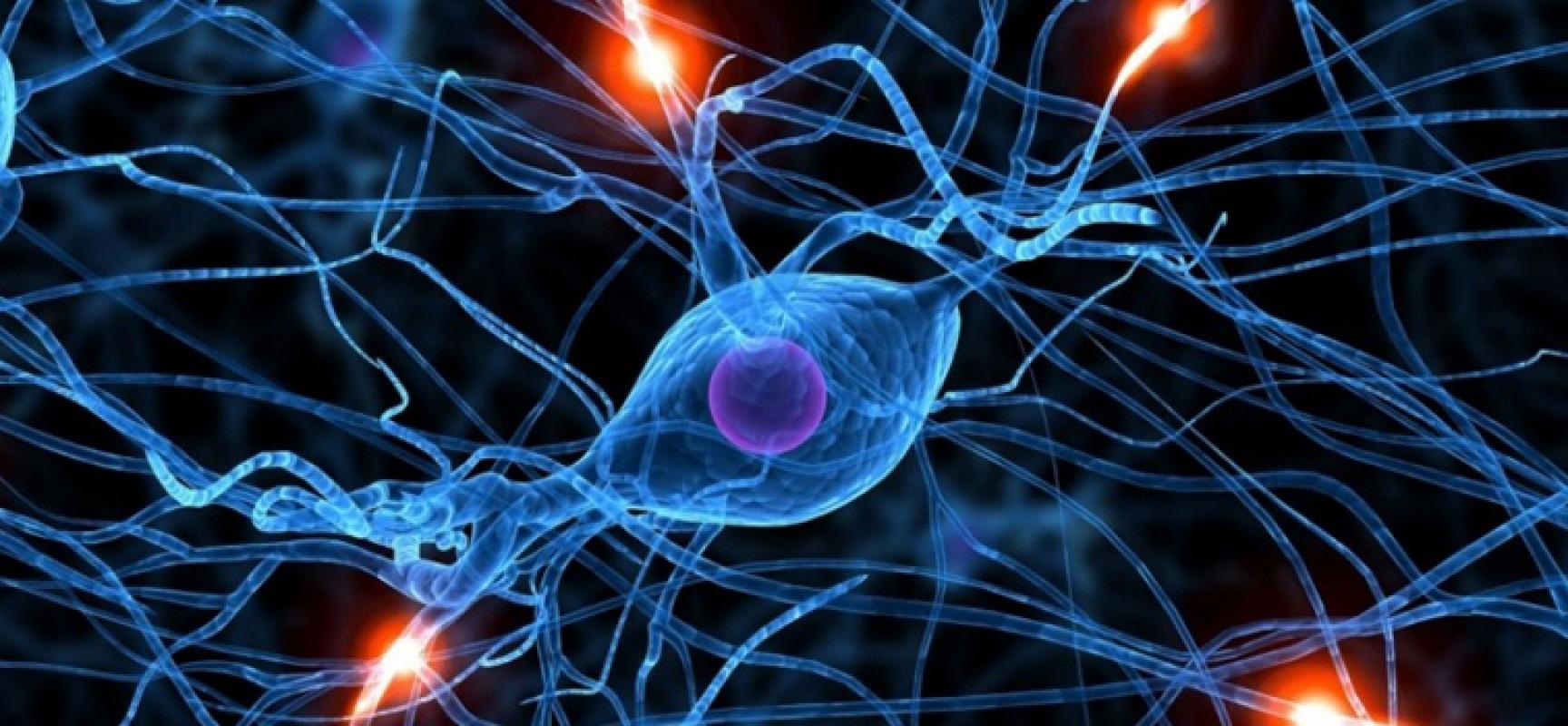 A Bisceglie nascono due sportelli per informare su Alzheimer e Parkinson