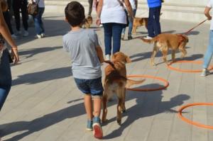 Dogs & Kids
