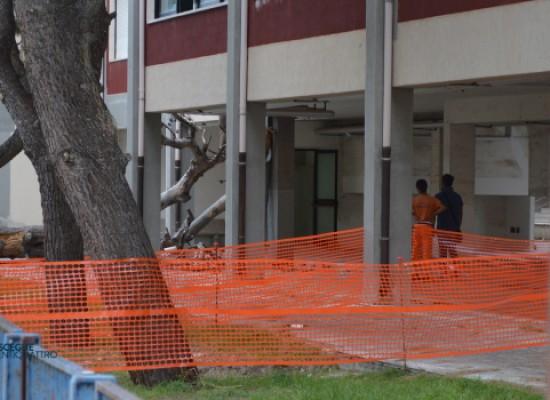 Scuola Salnitro, cade albero e provoca danni a due aule / FOTO