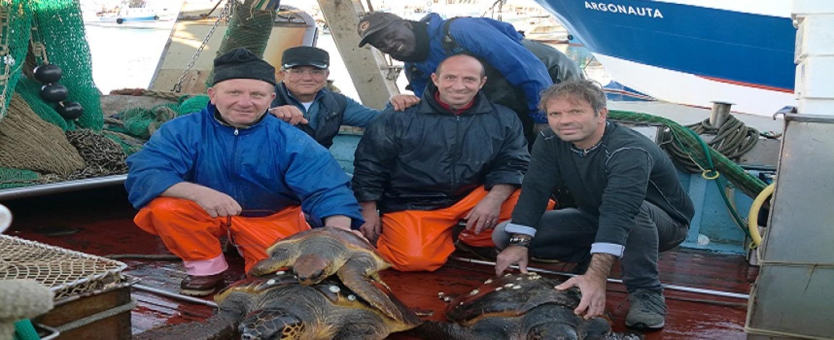 """Salvate tre tartarughe marine in una sola battuta di pesca, la """"Nuova Giovanna"""" ancora protagonista"""