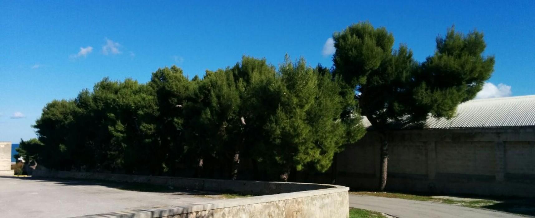 Lavori di somma urgenza aree parcheggio site sul lungomare Paternostro e viale Cimitero