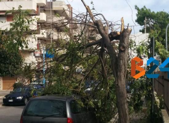 Albero si piega pericolosamente in due in Via Lamaveta a causa delle forti raffiche di vento / FOTO
