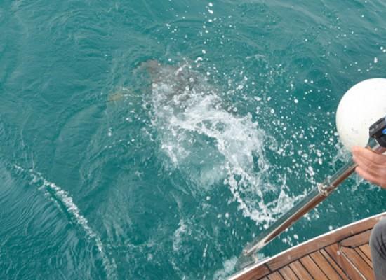 Il Centro di Recupero Tartarughe Marine di Molfetta salva i primi tre esemplari del 2015