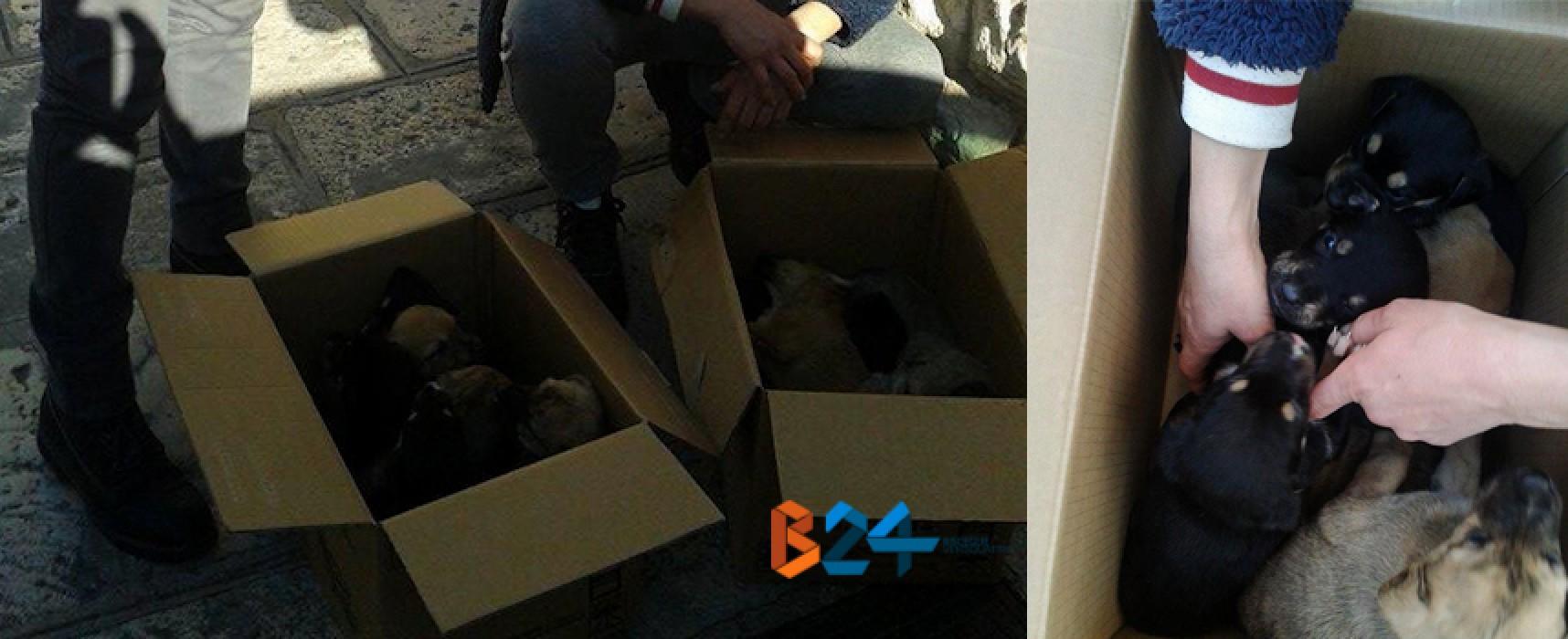 Quattordici cuccioli di cane ritrovati negli ultimi giorni, i volontari chiedono aiuto al sindaco