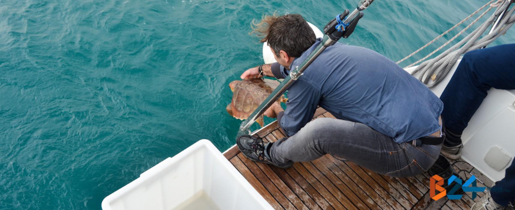 """Centro di recupero tartarughe marine, Spina: """"Lo faremo a Bisceglie"""""""