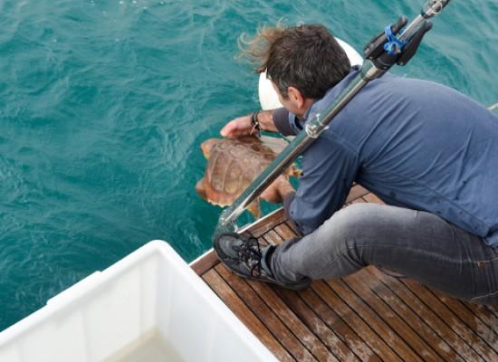 Turtle Day, oggi la liberazione delle tre tartarughe catturate