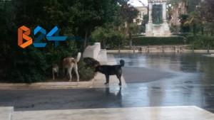Randagi aiuola piazza vittorio emanuele