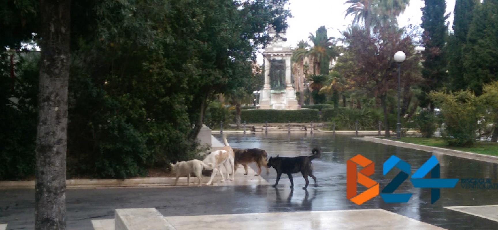 Branco di randagi in piazza Vittorio Emanuele in pieno giorno, le nostre domande all'Asl