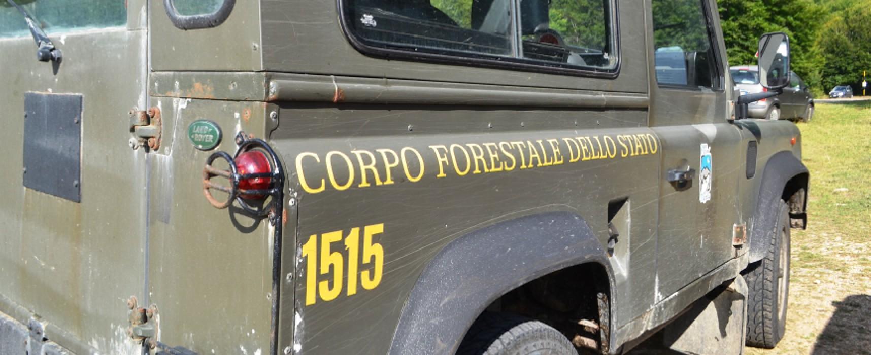 Protocollo tra Comune e Corpo Forestale dello Stato, Spina: «Importante forma di collaborazione istituzionale»