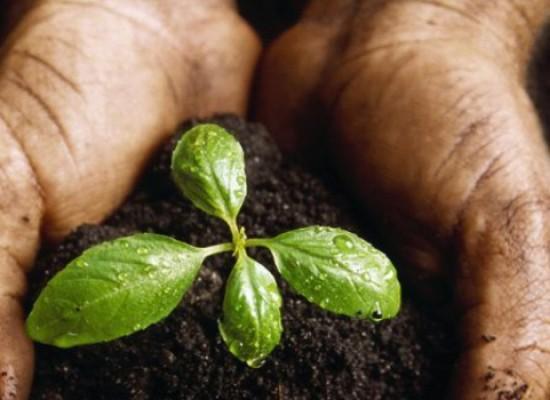 Protocollo d'intesa sull'Agricoltura Sociale: giovedì 14 la firma dell'accordo tra GAL Ponte Lama e istituzioni