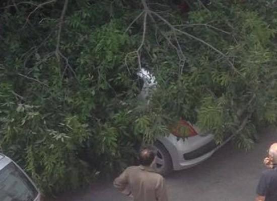 Via Pascoli, cade grosso ramo, residente lo schiva in tempo/FOTO