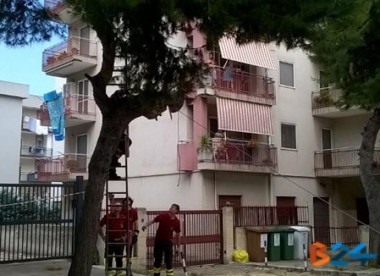Via sac. Di Leo, si staccano rami da un albero: Vigili del Fuoco intervengono per la messa in sicurezza / FOTO