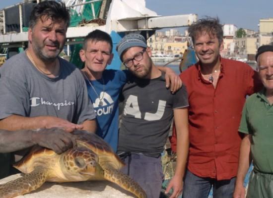 Salvata una tartaruga marina al largo della costa tra Trani e Bisceglie